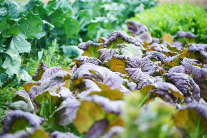 Organic, Non-GMO greens