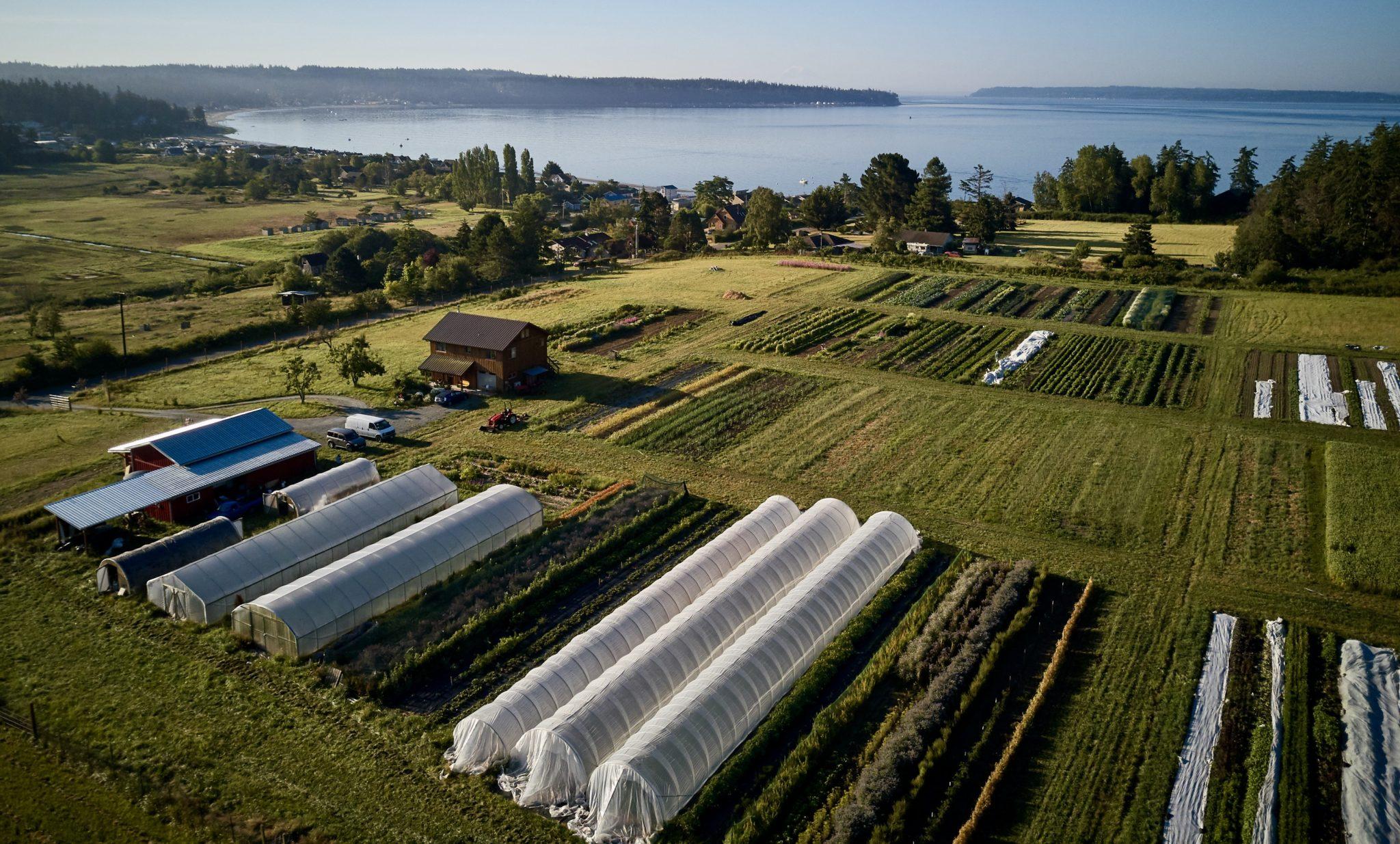 Organic Non-GMO Pacific NW USA Arugula Seeds