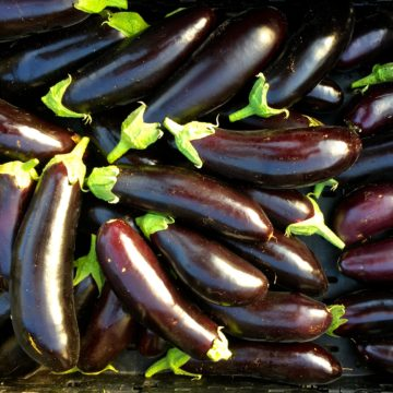 Eggplant Seeds