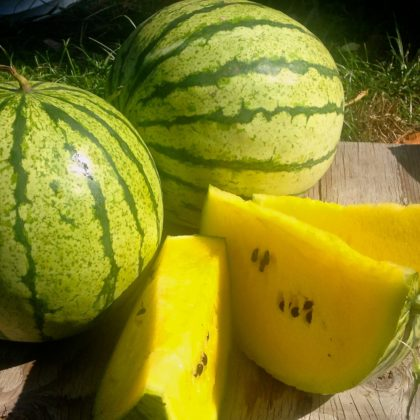 Organic, Non-GMO Watermelon Seed