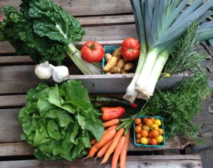 Whidbey CSA Farm Share