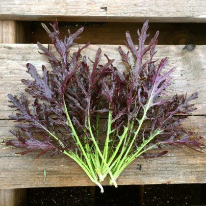 Organic, Non-GMO Ruby Streaks seed