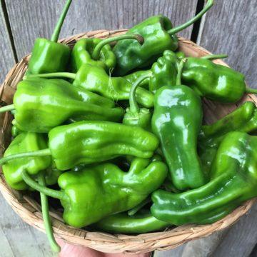 Organic, Non-GMO Pepper Seed