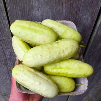 Salt and Pepper Cucumber