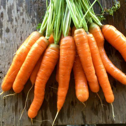 Organic, Non-GMO Carrot Seed